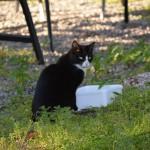 Vi har seks katter på gården som holder mus og rotter unna. De heter Mia, Snowy, Milkshake, Bamse, Fluffy og Påsan.