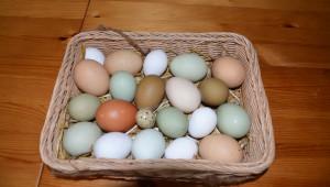 Fargerike egg